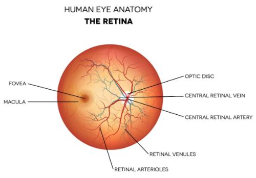 retina 2 resized